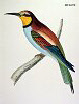 The Bee Eater, BirdCheck.co.uk